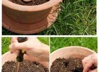 oeuf cru dans pot terre