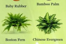 Plants that cleanse the air