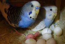 Parakeet / Leuke drukte makers