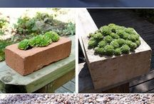 ideas with succulents