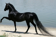 A Horse of Course / The horse (Equus ferus caballus) is one of two extant subspecies of Equus ferus, or the wild horse. It is an odd-toed ungulate mammal belonging to the taxonomic family Equidae.  / by Karen ~