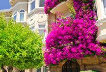 Urban gardening, flowers in the city