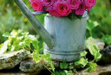 Садовые премудрости - Garden of wisdom / .... вся красота природы и рук человеческих и себя под окном