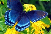 Butterflies of all colours