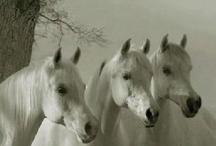 Hoof It / More Beautiful Horses / by Raven M