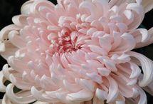 Kvety (flowers)