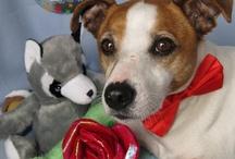 Dla Psa, Zabawki dla psów, Toys for dogs, Gift dog, Hund / Dla Psa, Zabawki dla psów, Toys for dogs, Gift dog, Hund