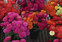 Flower Farming