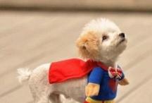 My Doggie Princess Sparkles. / by Izzy Kreider