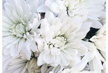 fleurs/végétaux