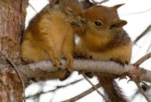 Hedgehogs & Squirrells