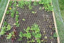 Grow from base vegetables and fruits