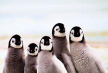 Dieren: Pinguïns / Mooie foto's van lieve en leuke pinguins