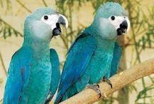 Птичики