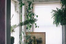 Jungle   Interior