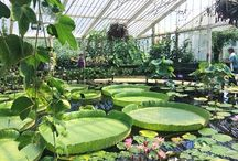 plants world