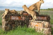 Nairobi, Kenya / Things to do in and around Nairobi, Kenya / by City Lodge