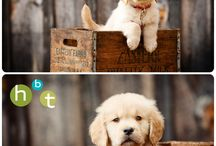 puppies photography