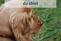 Mon blog - Petit chiot deviendra grand