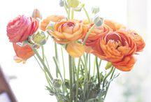 FLOWERS LOVER