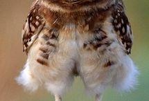 owls baykuşlar