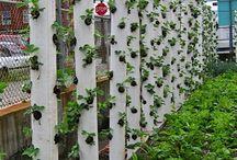 Garden / by Patti Kebely