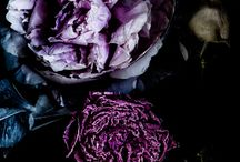 COLOR | Purple / inspiration and ideas for purple florals