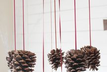 Pine Cones Everywhere / by Quiesce
