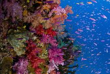 Underwater Uniqueness / Stunning photos from underwater. Marine life, coral reefs, etc....