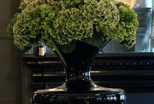 Hydrangea from Holland / The best hydrangea flowers in the whole wide world!