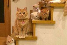 anak kucing kawai
