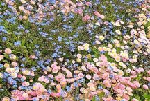 flower aestheric