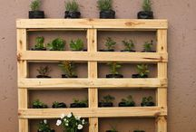 The Green Bunch Product / Pallet Garden custom made by The Green Bunch.   Choose from:  - Flower Pallet Garden (Aesthetic) - Herb Pallet Garden  - Medicinal Pallet Garden - Vegetable Pallet Garden   All Pallet Gardens come with 24 plants/ seedlings/ herbs.   Cost R450.00 Free Delivery around the Hatfield, Lynnwood and Irene Area.