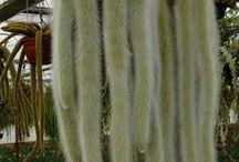 Cactus divers / #cactus