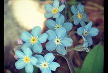 //Herbarium