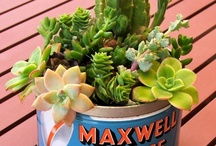 Cacti & Succulents /  on cacti &  succulents and  other ideas / by maryannevella