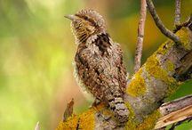 Aves - Birds / Aves del mundo / by Libanorojo