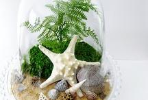 Glass domes / Glass domes