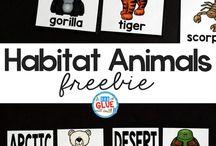 habitat animals