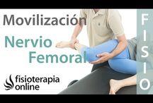 Fisio nervio femoral