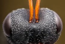 Hmyz makro