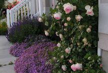 gardeninig / giardino fiori piante paesaggi