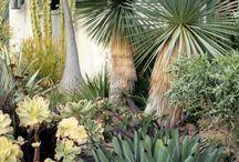 Landscape cactus