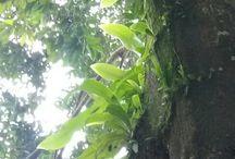 Tropis Indonesia