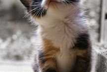 Kittens / Care and support of cute kittens