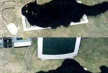Koty rozwalają system