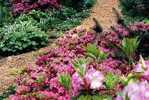 Landscaping ideas / by Samantha Fowkes