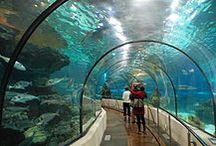 Aquarium / Cool aquarium