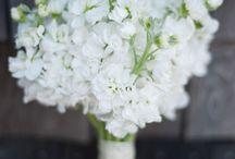 Kytky, kytice