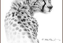 Animals - sketches